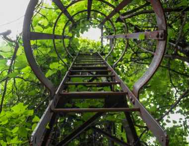 leaves ladder green looking up